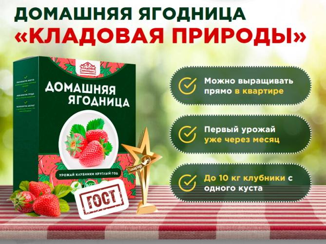 заказать домашнюю ягодницу клубники