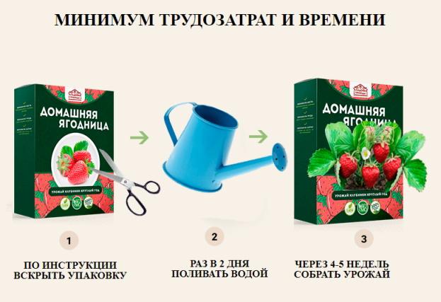 клубника домашняя ягодница купить
