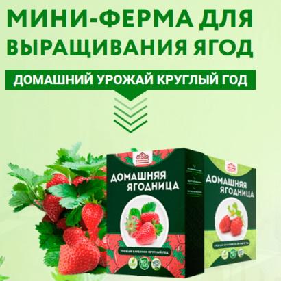 ягодница клубники дома